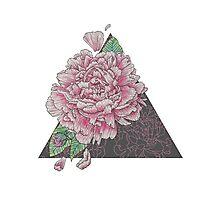 Pink Peony Floral Study, Illustrative Design Photographic Print