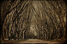 woodland trees by Ingrid Beddoes