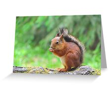 Cute squirrel eating a nut Greeting Card