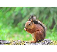 Cute squirrel eating a nut Photographic Print
