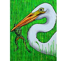 Egret with Frog Photographic Print