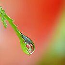 Garden Waterdrop  2  ' Apples'   by relayer51