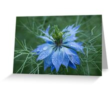 Love in a Mist (dedicated to Lynn Carter) Greeting Card