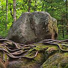Rocks and Roots by Dawne Olson