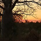 Kimberley Sunset with boab tree, Western Australia by Virginia  McGowan