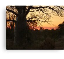 Kimberley Sunset with boab tree, Western Australia Canvas Print
