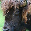 Buffalo Head by Cee Neuner