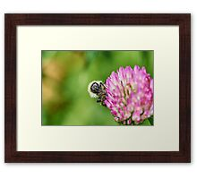 Common carder bee Framed Print