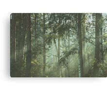 Mystery magical forest Canvas Print