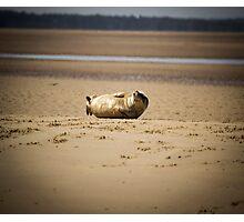 Cute Chuckling Seal Pup Photographic Print