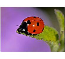 Bug Off Photographic Print