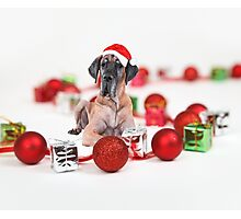 Great Dane Dog with Christmas Ornaments Gifts  Photographic Print