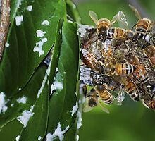 Mind Your Beeswax! by Laurie Minor
