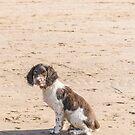 Springer Puppy by JEZ22