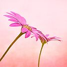Pretty in pink by peaky40