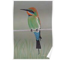 Bee-eater Bird - Acrylic Painting Poster