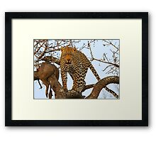Male leopard with catch! Framed Print