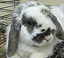 Hunny Bunny by Monnie Ryan