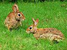 Bunnies by Evelyn Laeschke
