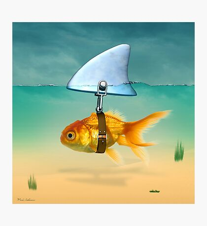 gold fish  Photographic Print
