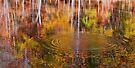 Water Reflection - Sweet Water Creek by Evelyn Laeschke