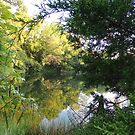 August Pond by TrendleEllwood