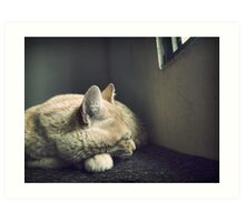 Beauty Is a Sleeping Cat  Art Print