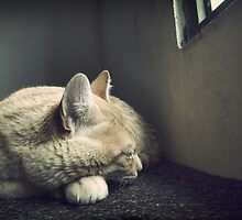 Beauty Is a Sleeping Cat  by Maria  Gonzalez