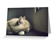 Beauty Is a Sleeping Cat  Greeting Card