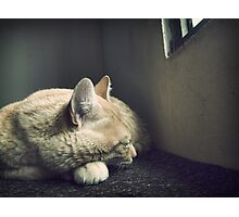 Beauty Is a Sleeping Cat  Photographic Print
