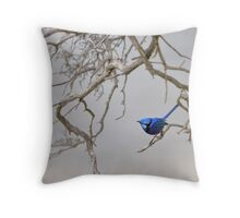 Splendid - the brilliant blue Splendid Fairy-wren Throw Pillow