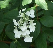 White Flowers Against Greenery by Karen L Ramsey