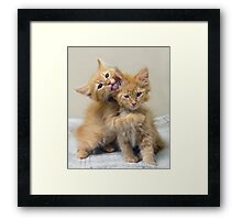 Orange Tabby Kittens Framed Print
