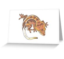 Red Crested Gecko  Greeting Card
