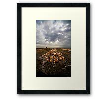 Onion field Framed Print