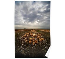 Onion field Poster