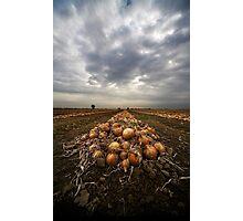 Onion field Photographic Print
