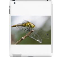 Ruddy Darter Dragonfly iPad Case/Skin