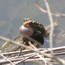 Vocalizing american toad by caybeach
