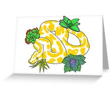 Albino Ball Pythons with Succulents Greeting Card
