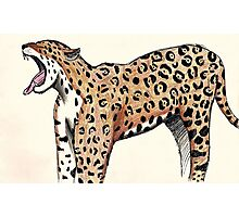 Jaguar Sketch Photographic Print