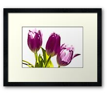 Tulips In The Morning Light - Digital Oil Framed Print