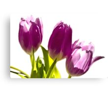 Tulips In The Morning Light - Digital Oil Canvas Print