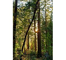 Forest Glow Photographic Print
