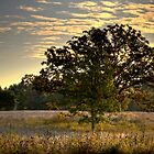 Burr Oak at Sunrise by Roger Passman