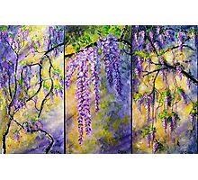 Wisteria Blooming - Triptych Photographic Print
