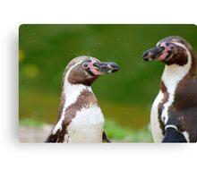 Humboldt Penguins Canvas Print