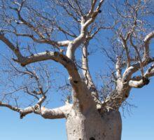 Boab Tree Sticker