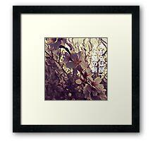 Cherry blossom solitude Framed Print