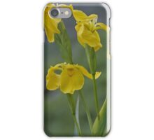 Yellow Flag Iris - Donegal iPhone Case/Skin